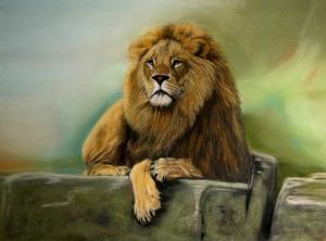 König im Tierreich Pastell auf Pastelcard 30x 40 cm